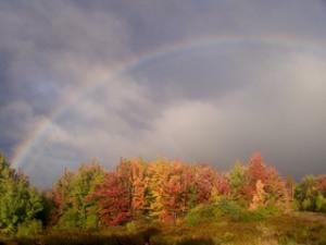 rainbow018